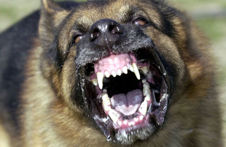 should dangerous dogs banned essay