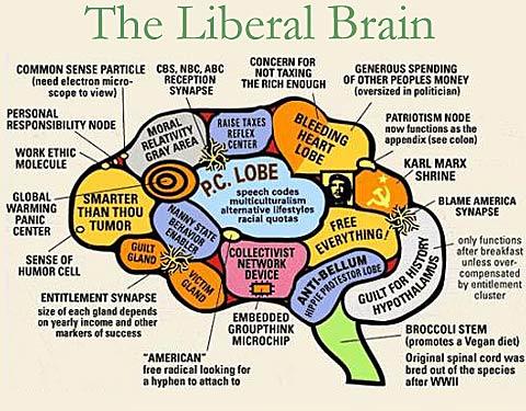 the-liberal-brain