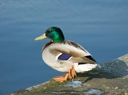 Well, it's a canard then...