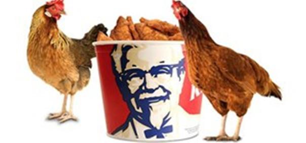 Mundabor's Mystical Chicken Experience.