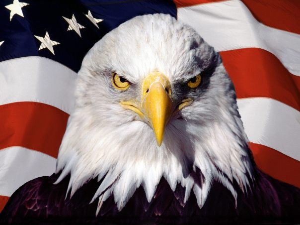 178778-american-eagle