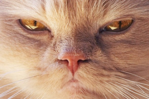 angry-cat-446265