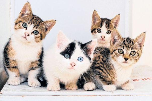 four-kitten