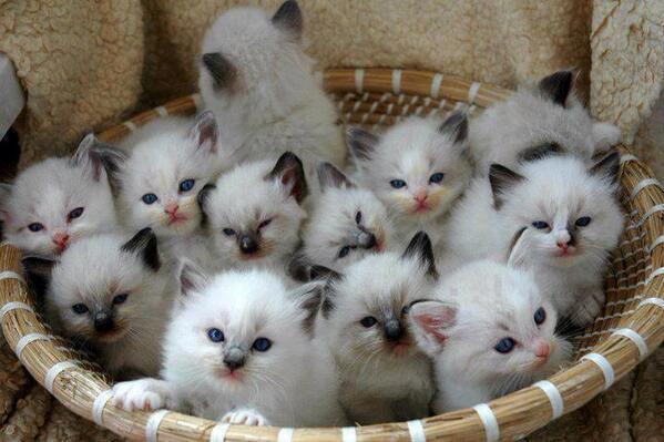 12-kitten