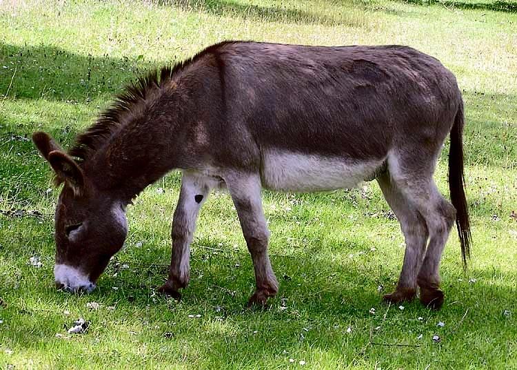 Donkey_1_arp_750px.jpg