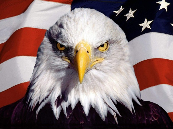 usa-eagle-wallpapers-01